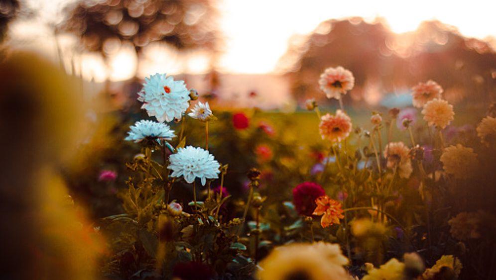 Blumenwiese im Herbst