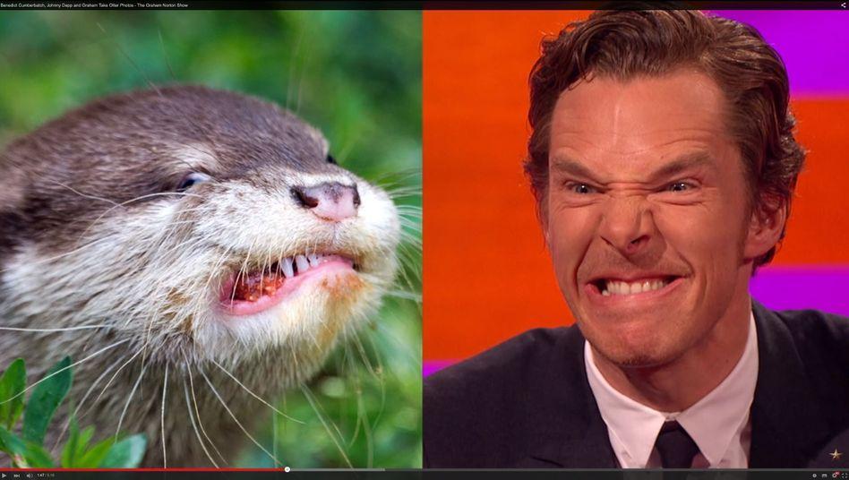 Cumberbatch stellt Otter-Fotos in der BBC-Talkshow von Graham Norton nach