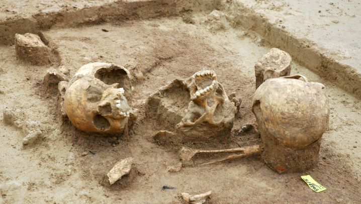 Photo Gallery: Traces of Stone-Age Cannibalism Found in Germany