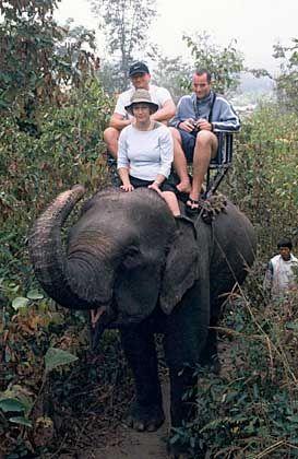Elefantendame Noi: Reiten gegen Bananenzufuhr