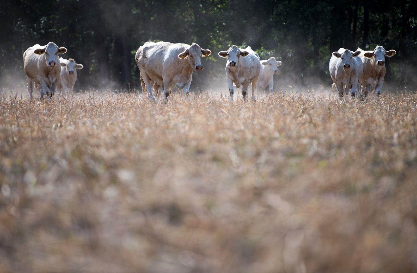 Dürr Landwirtschaft