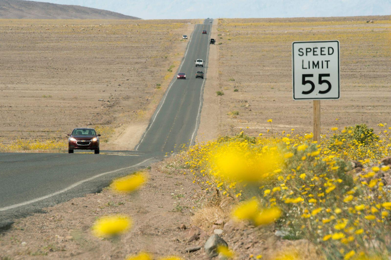 """Death Valley/ Blumen/ """"super bloom"""""""
