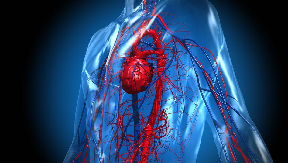 Blutversorgung des Herzens