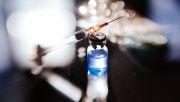 Radikale Impfgegner sind nicht das Problem
