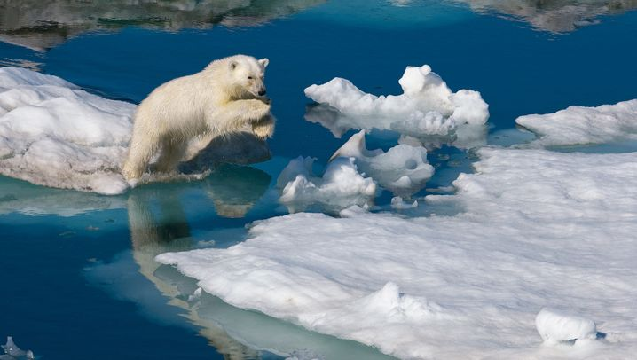 Naturfotos: Eiskalt und wunderschön