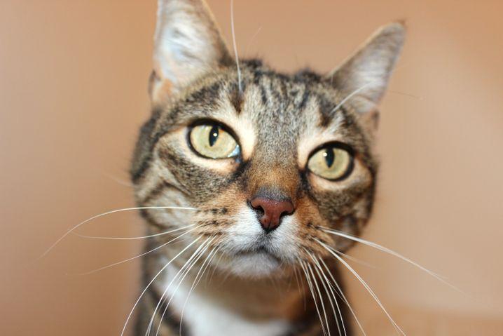 Katze Romy