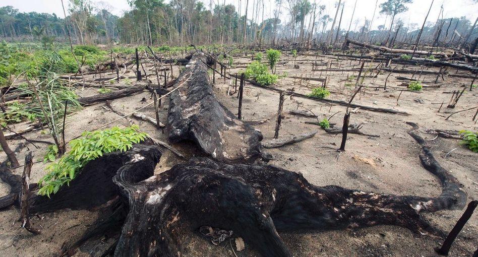 Gerodeter Regenwald in Nordbrasilien