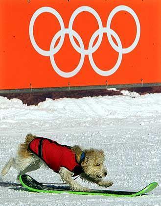 Dog-Style: Ein entlaufener Vierbeiner versucht sich an einem herumliegenden Board