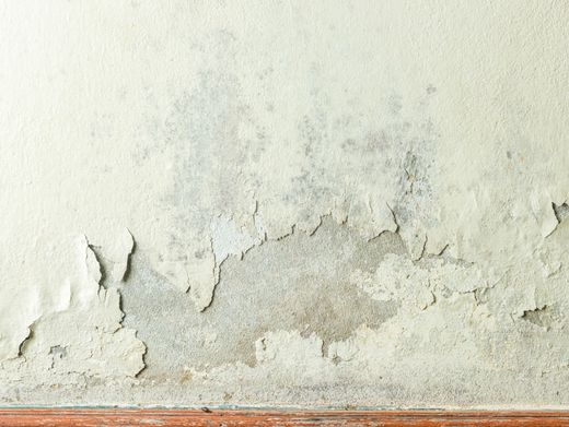 Schimmelbefall an der Wohnungswand