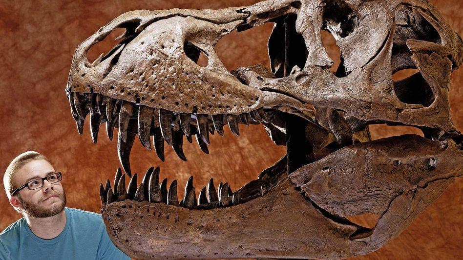 T.-rex-Schädel