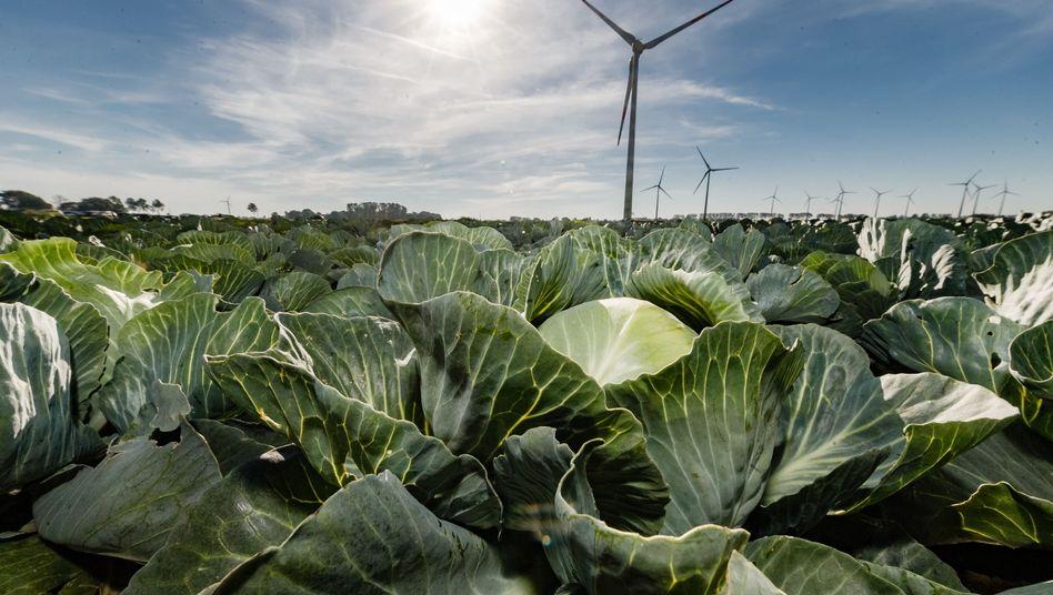 Nur Kohl - und anderes Gemüse - zu essen bringt für den Klimaschutz mehr, als auf ein E-Auto umzusteigen. Das zeigen neue Berechnungen (Symbolbild).