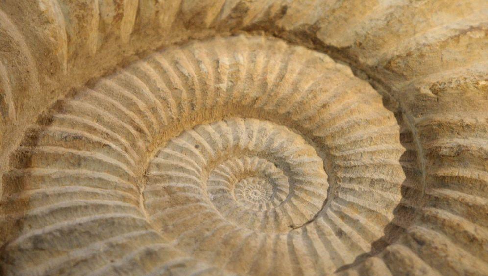 Weichteile und Nahrungsreste: Reise in den Mikrokosmos der Urzeit