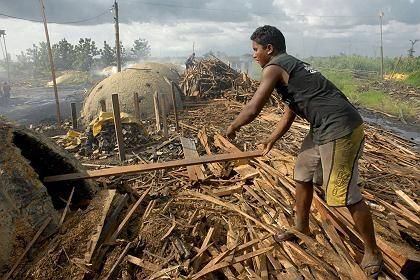 Deforestation costs more than the banking crisis, a study shows.