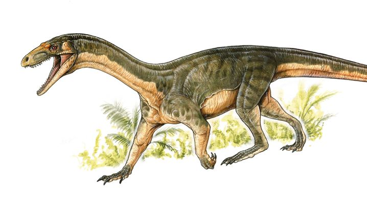 Dino-Vorfahren: Der tiefergelegte Teleocrater