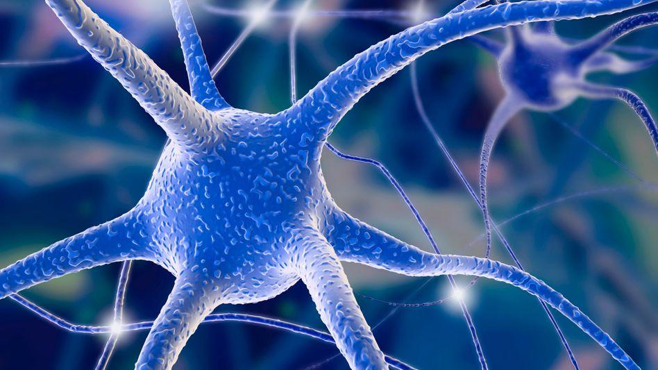 """Nervenzellen (Illustration): Bei epileptischen """"Aussetzern"""" spielen Neuronen verrückt, selbst Störungen des Bewusstseins können die Folge sein"""