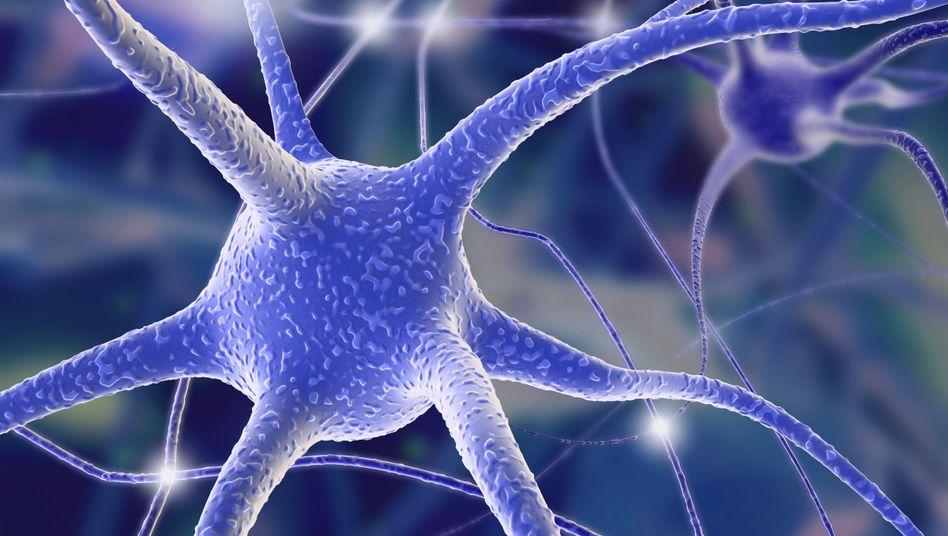 Nervenzellen (Illustration): Souvenaid soll die Bildung von Synapsen anregen
