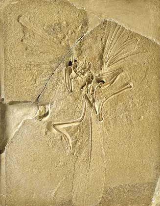 Urzeit-Fossil: Fliegen wie ein Vogel
