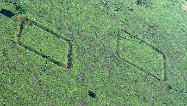 Rätselhafte Erdmuster: Luftbilder zeigen Überreste einer Amazonas-Kultur