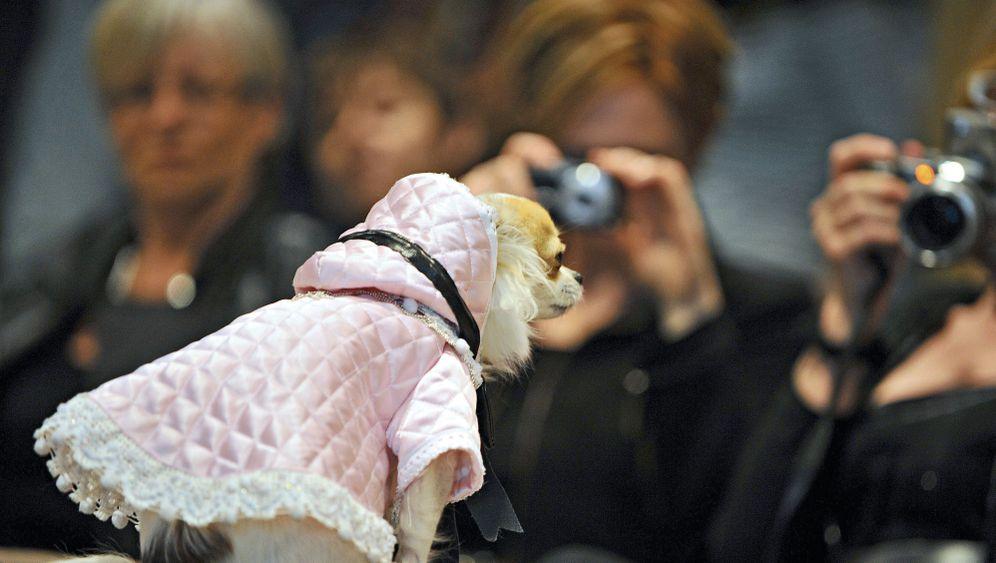 Tiermarkt: Maskierter Müll