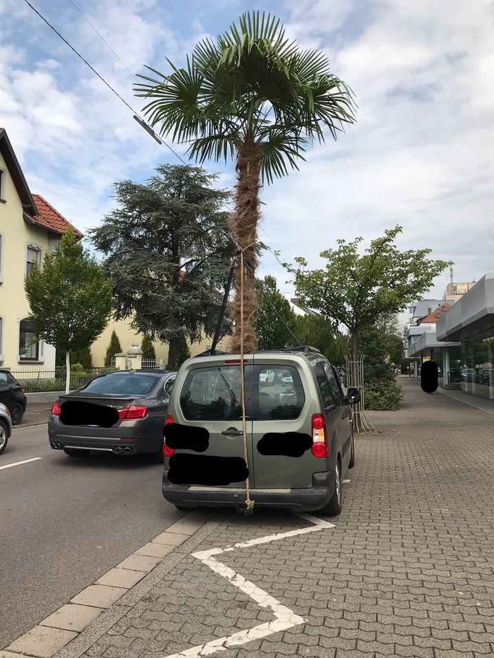 Die Palme war laut Polizei mehr als vier Meter hoch