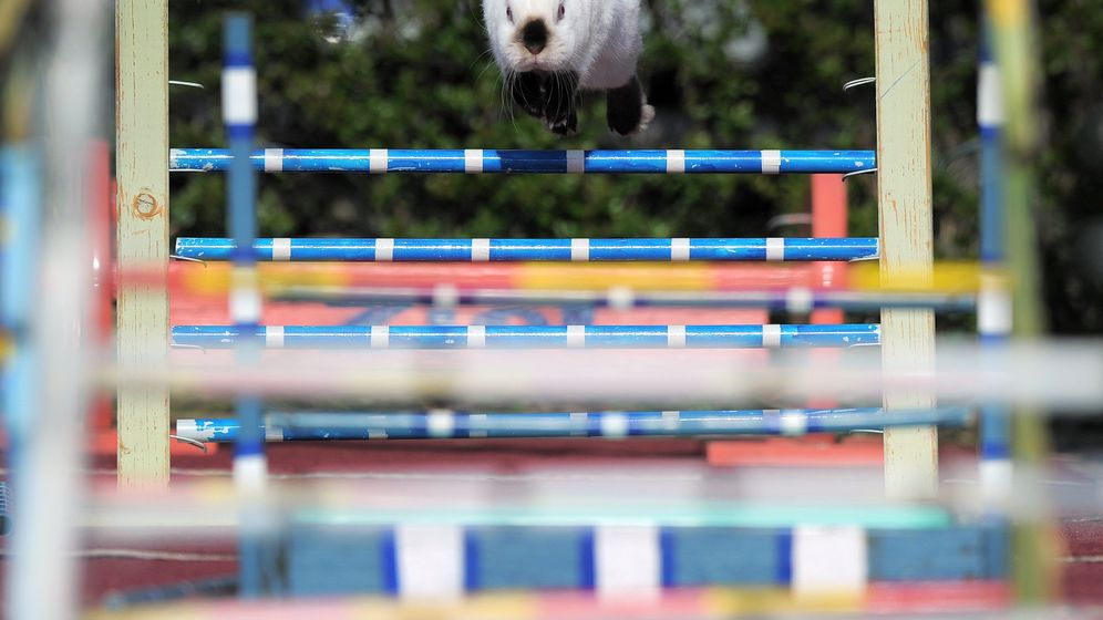 Photo Gallery: Jump Rabbit Jump
