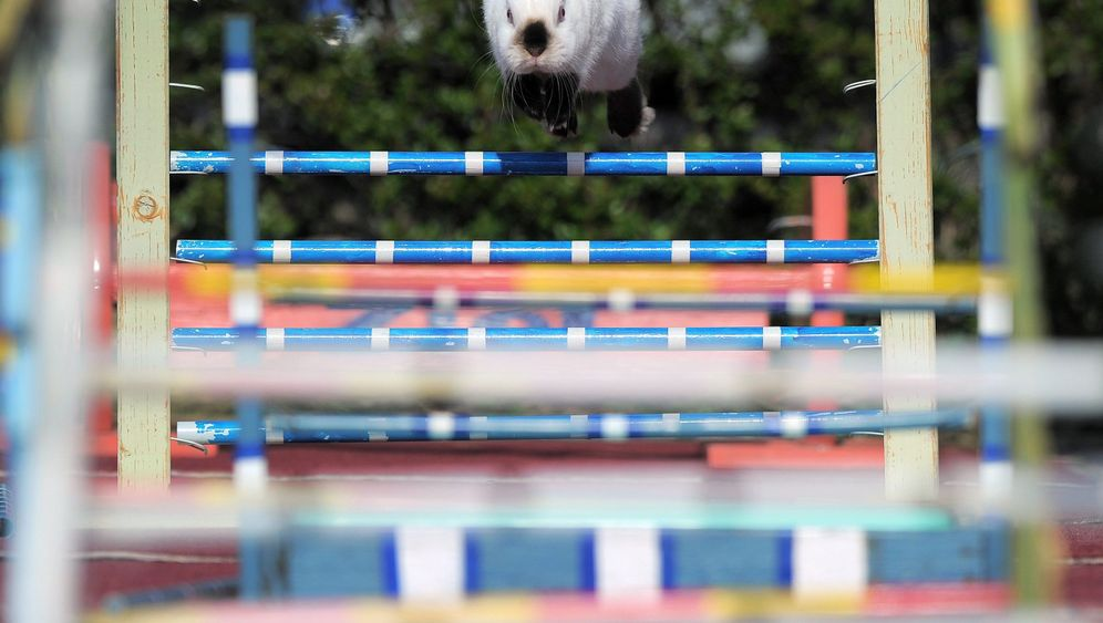 Photo Gallery: Jump Rabbit Jump