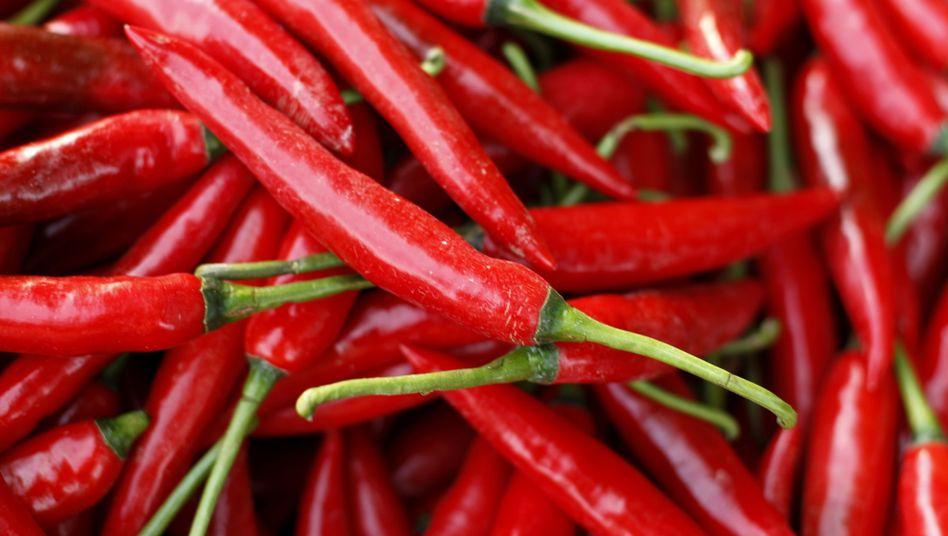 Chilis: Capsaicin gibt ihnen die Schärfe