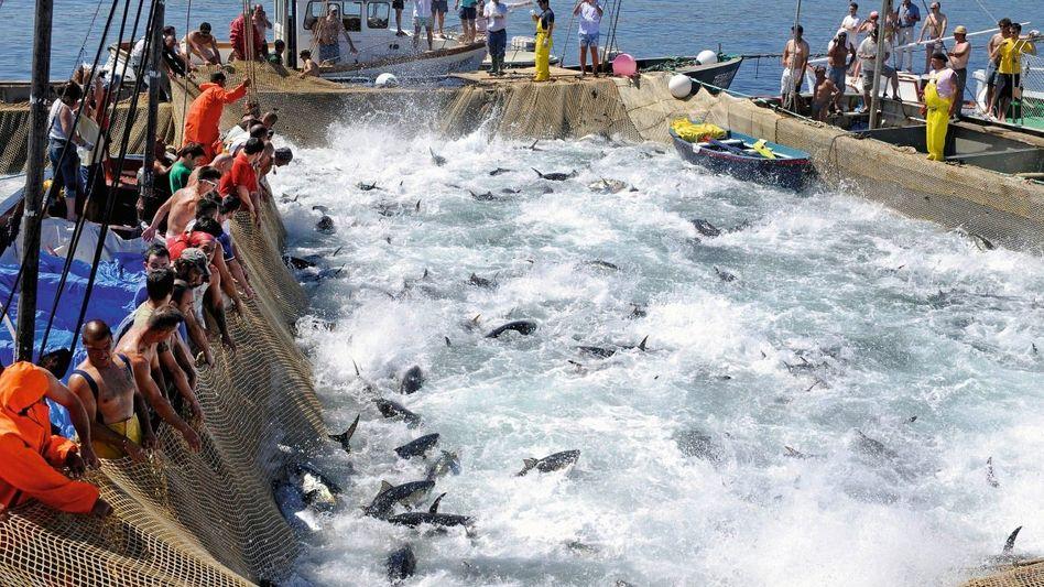 Thunfisch-Fang vor Sizilien