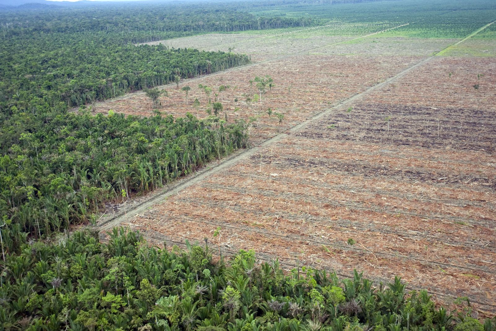 Abholzung/Indonesien