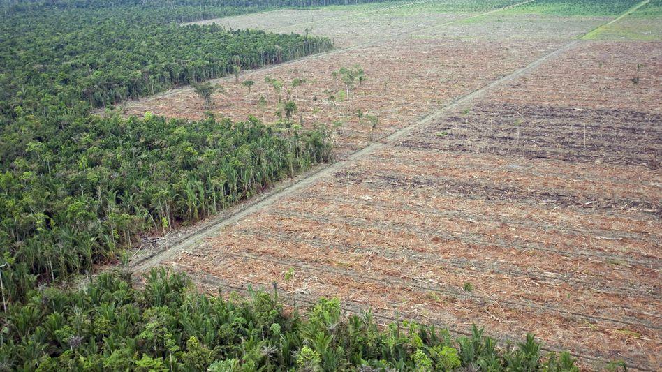 Großflächige Rodung in Indonesien (im Oktober 2008): Illegale Abholzung sinkt