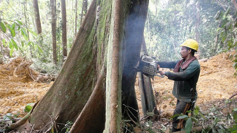 Holzfäller auf Kalimantan, Indonesien: Vertrauen ersetzt Kontrolle