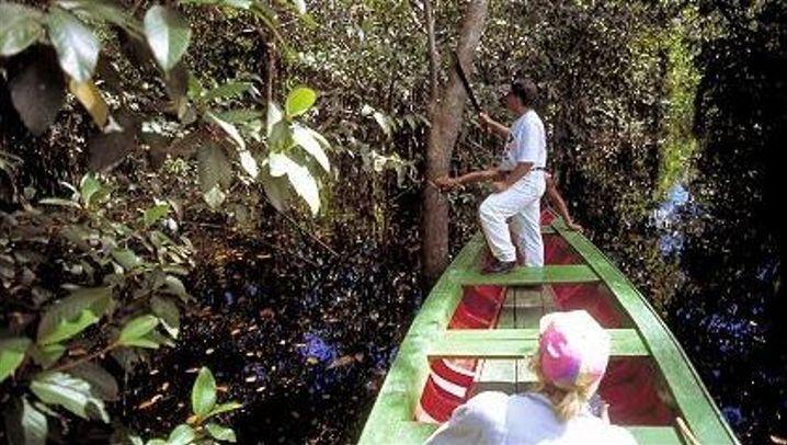 Amazonas: Per Auto, Boot und zu Fuß durch den Dschungel