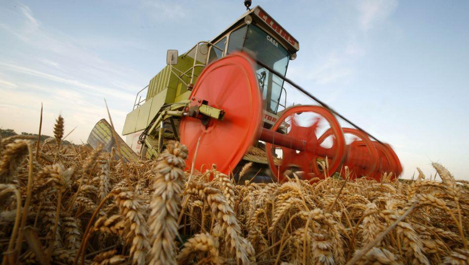 Getreideernte: Welchen Einfluss hat die Spekulation auf die Rohstoffpreise?
