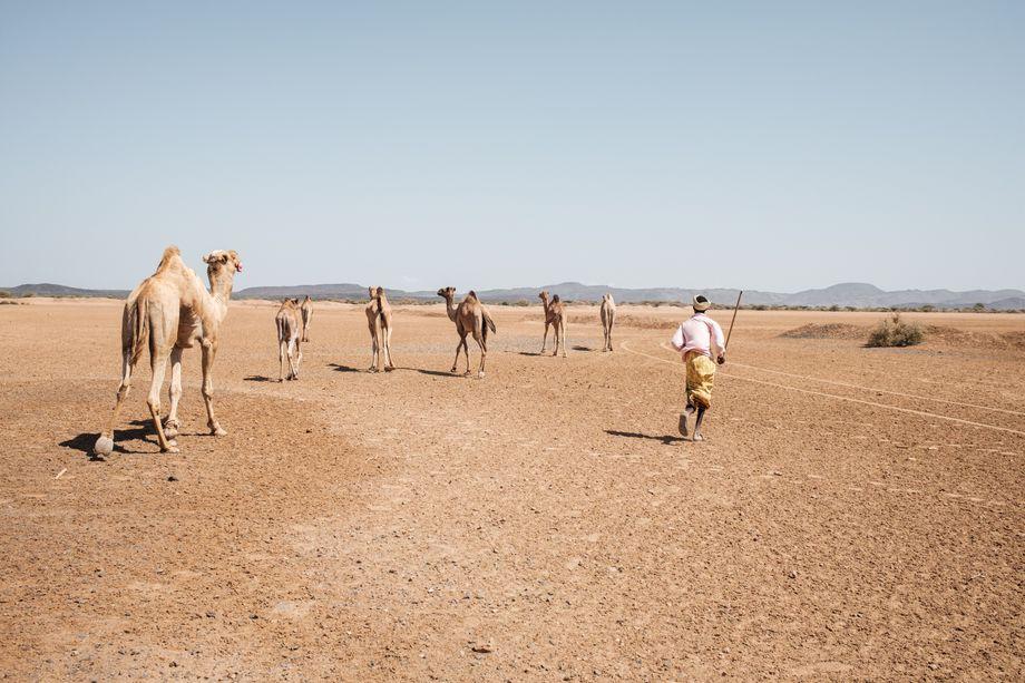 Afar-Nomaden in Dschibuti: Lastwagen überholen die Karawanen, das Salz wird industriell gefertigt, die Tiere verhungern und verdursten - wie kann eine Zukunft für die Menschen hier aussehen, damit sie nicht fliehen müssen?