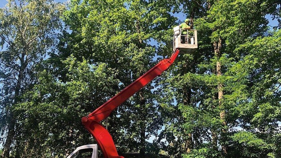 European Tree Worker im Einsatz