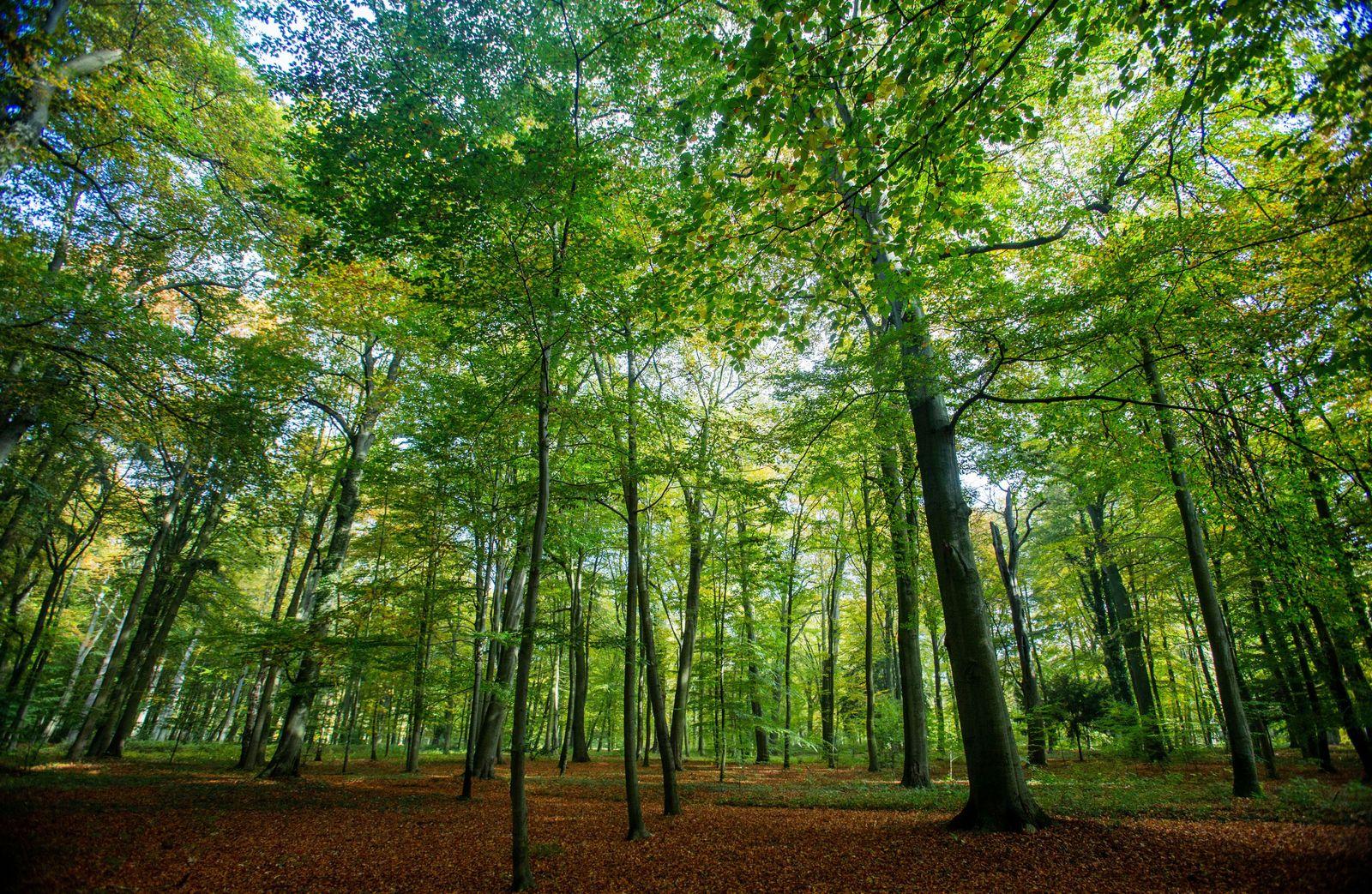 Wald in MV