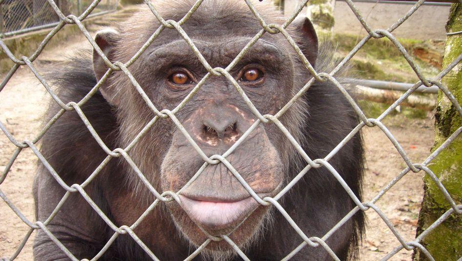 Tiere als Konkursmasse: Problem-Paviane und Pleite-Tiger