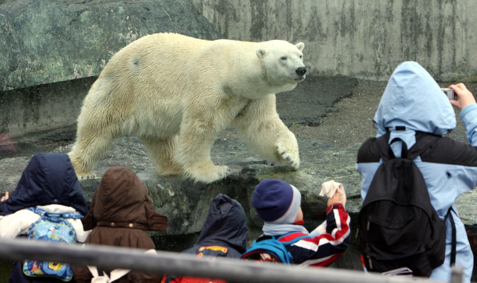 Eisbär Anton