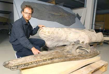 Fischsaurier-Fossil: Zurück ans Tageslicht