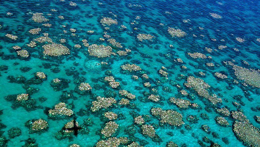 Korallenriff: Aus Bunt wird Grau