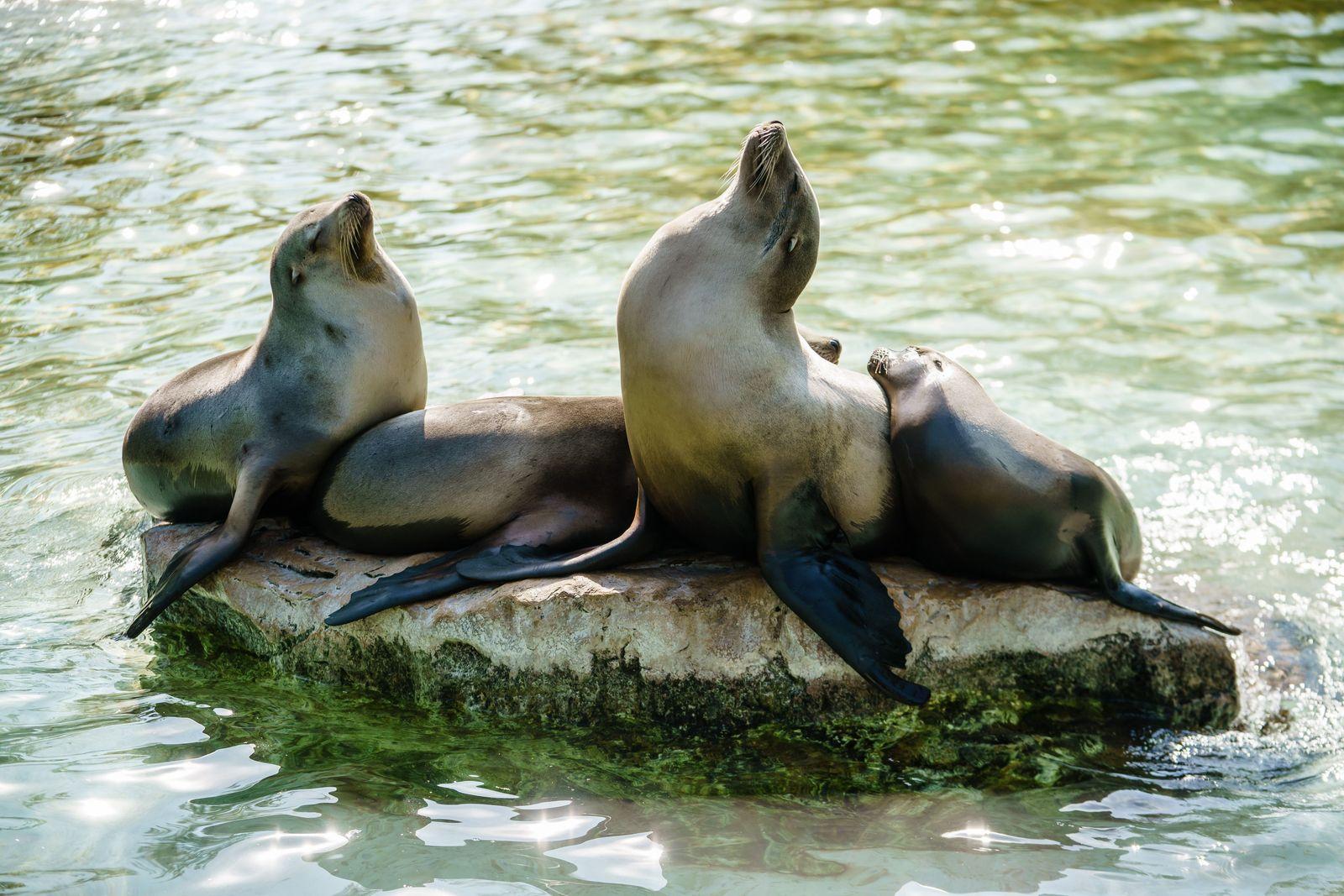 Berlin zoo reopens amid easing coronavirus restrictions in Germany - 28 Apr 2020