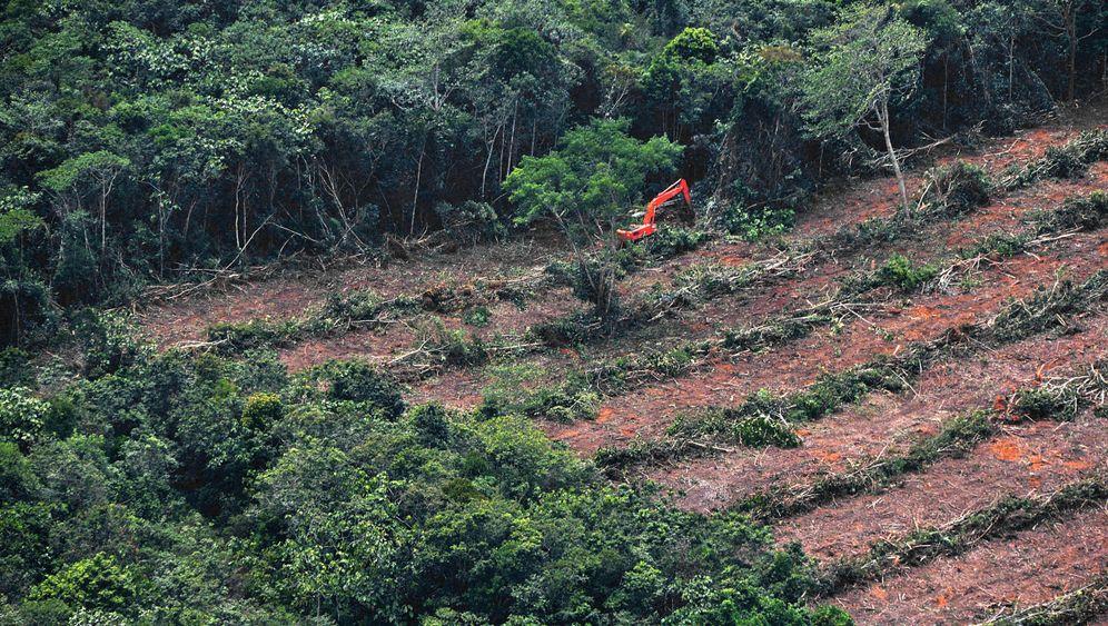 Ölproduzent Indonesien: Palmenmeer des Schreckens