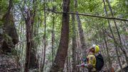Feuerwehr-Spezialeinheit rettet gefährdete Urzeit-Bäume vor den Flammen