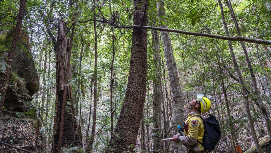 Löscharbeiten im Wollemi-Nationalpark: 40 Prozent seiner Fläche sind unberührte Natur