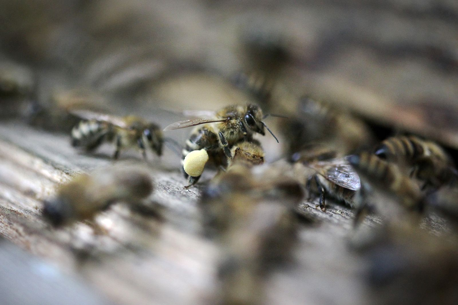 Bienenstock / Bienen