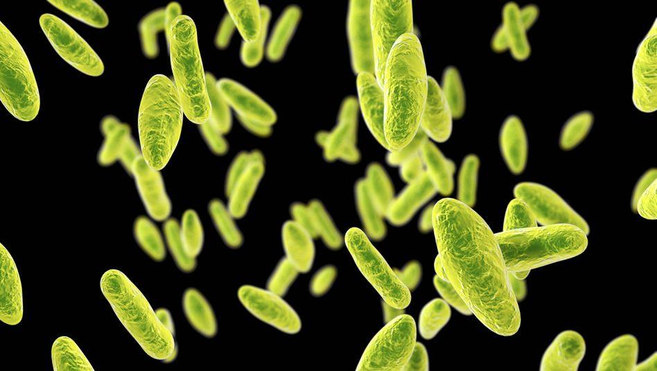 Computerillustration des Brucella-Bakteriums