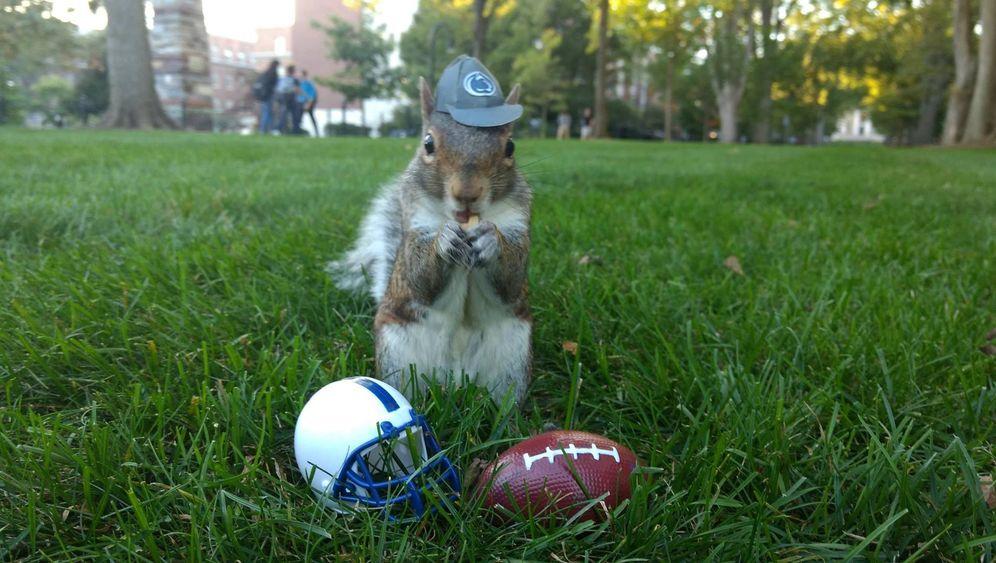 Campus-Tiere: Eichhörnchen in Kostümchen