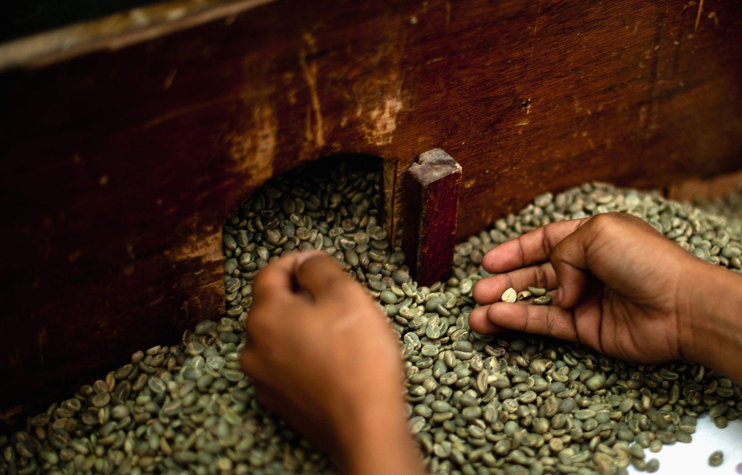 Bewertungen von grünen Kaffeebohnenpillen