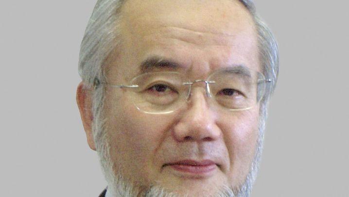 Nobelpreis Medizin 2016: Ohsumi und die Zell-Müllabfuhr