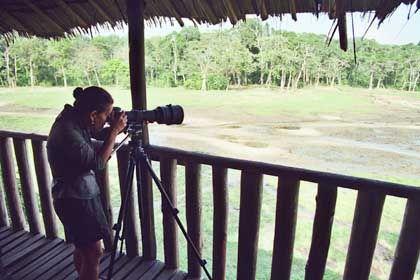 """Andrea Turkalo bei der Arbeit: Vom """"Mirador"""" aus beobachtet die Forscherin das Treiben der Elefanten"""